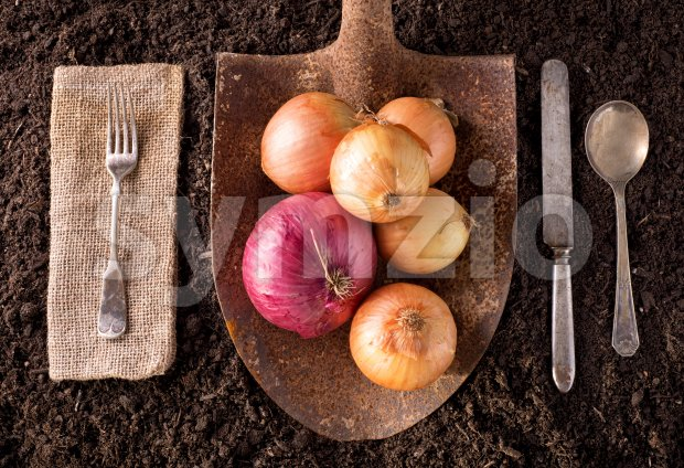 Organic farm to table healthy eating concept on soil background.
