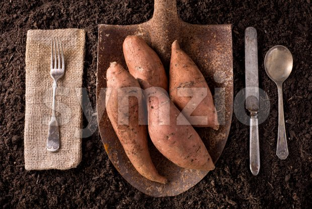 Sweet Potato Yams Stock Photo
