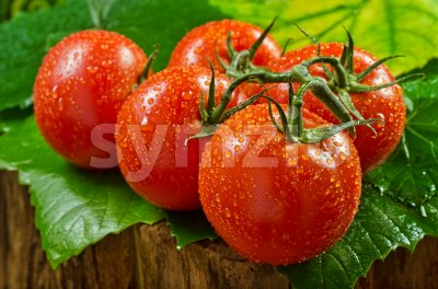 Vine Ripened Tomatos Stock Photo