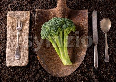 Brocolli Stock Photo