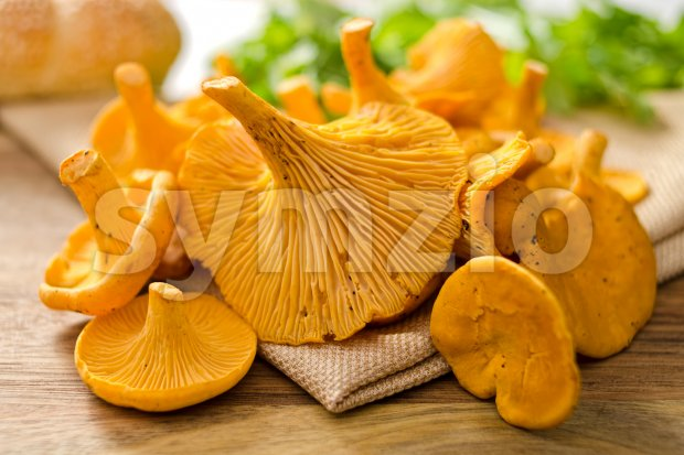 A grouping of freshly picked chanterelle mushrooms.