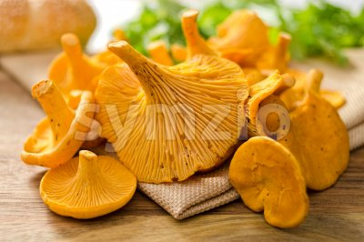 Chanterelle Mushrooms Stock Photo