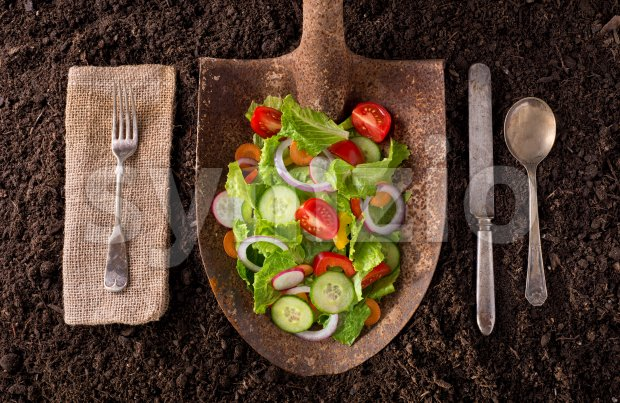 Locally grown garden salad on rusted shovel. Stock Photo